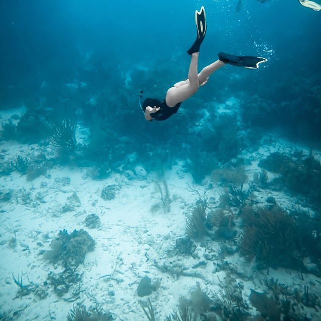 The Belize Barrier Reef is home to over 500 species of fish and 100 species of coral, and we invite you to come discover their beauty 🐠