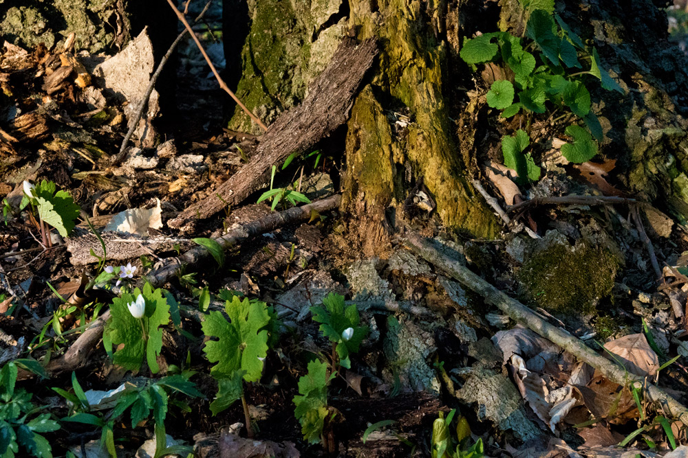 Look close and you'll see more and more mini-gardens of Spring. Photo by Joseph Maas
