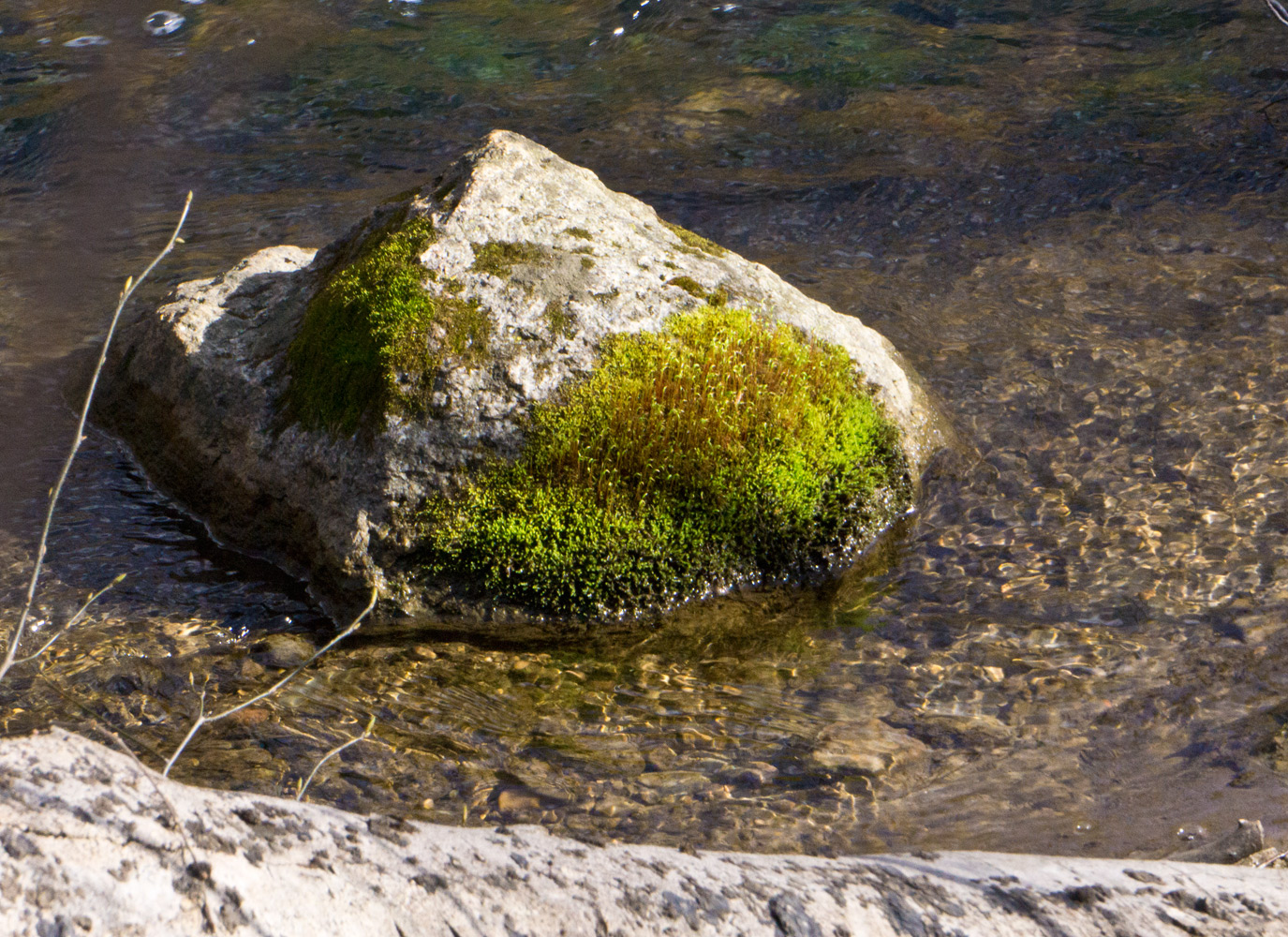 An island of new Spring growth.  Moss Island.  Photo by Rita Arnold