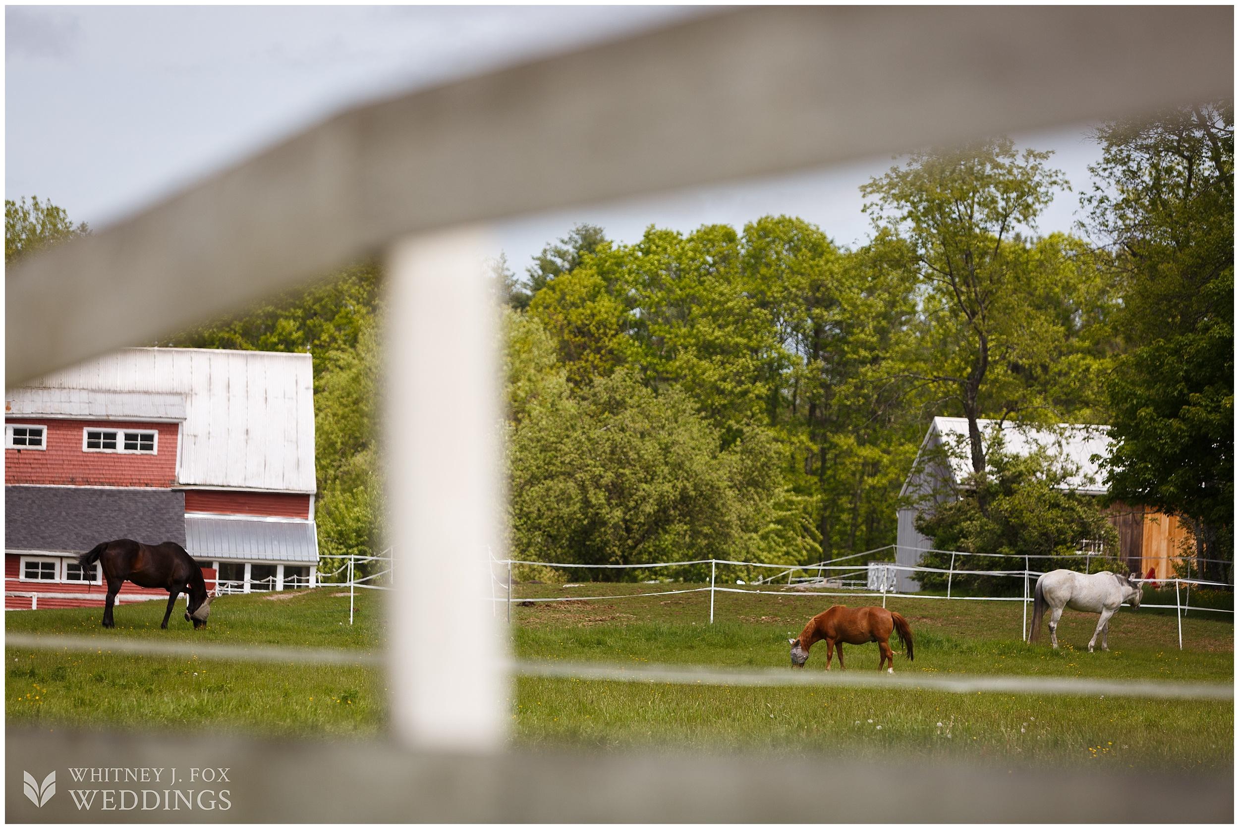 1_2_tai_josh_the_homestead_rest_be_thankful_farm_lyman_maine_photographer_whitney_j_fox_weddings_0630.jpg