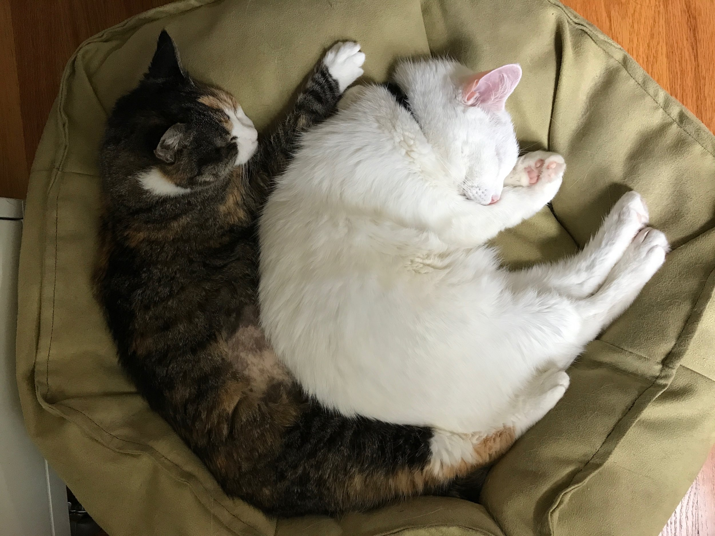 Martha + Vinny. Tussle and wrestle, but snuggle together more. 19 years young, full of sass and make me laugh.