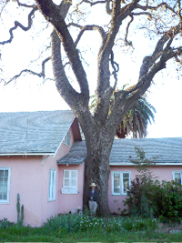 This is a picture of a tree, and a house. So there.