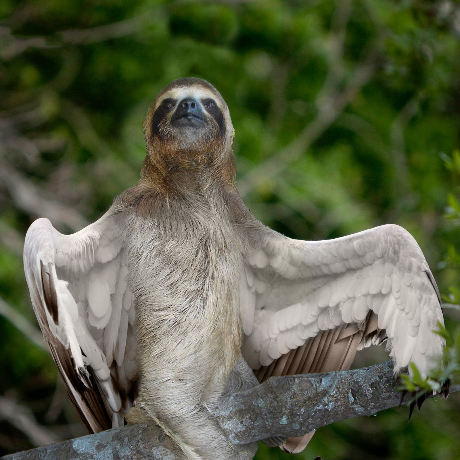 winged-sloth-hybrid-animal.jpg