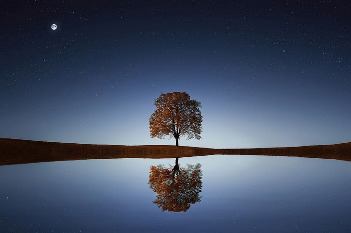 how-to-be-happy-entrepreneur-tree.jpg