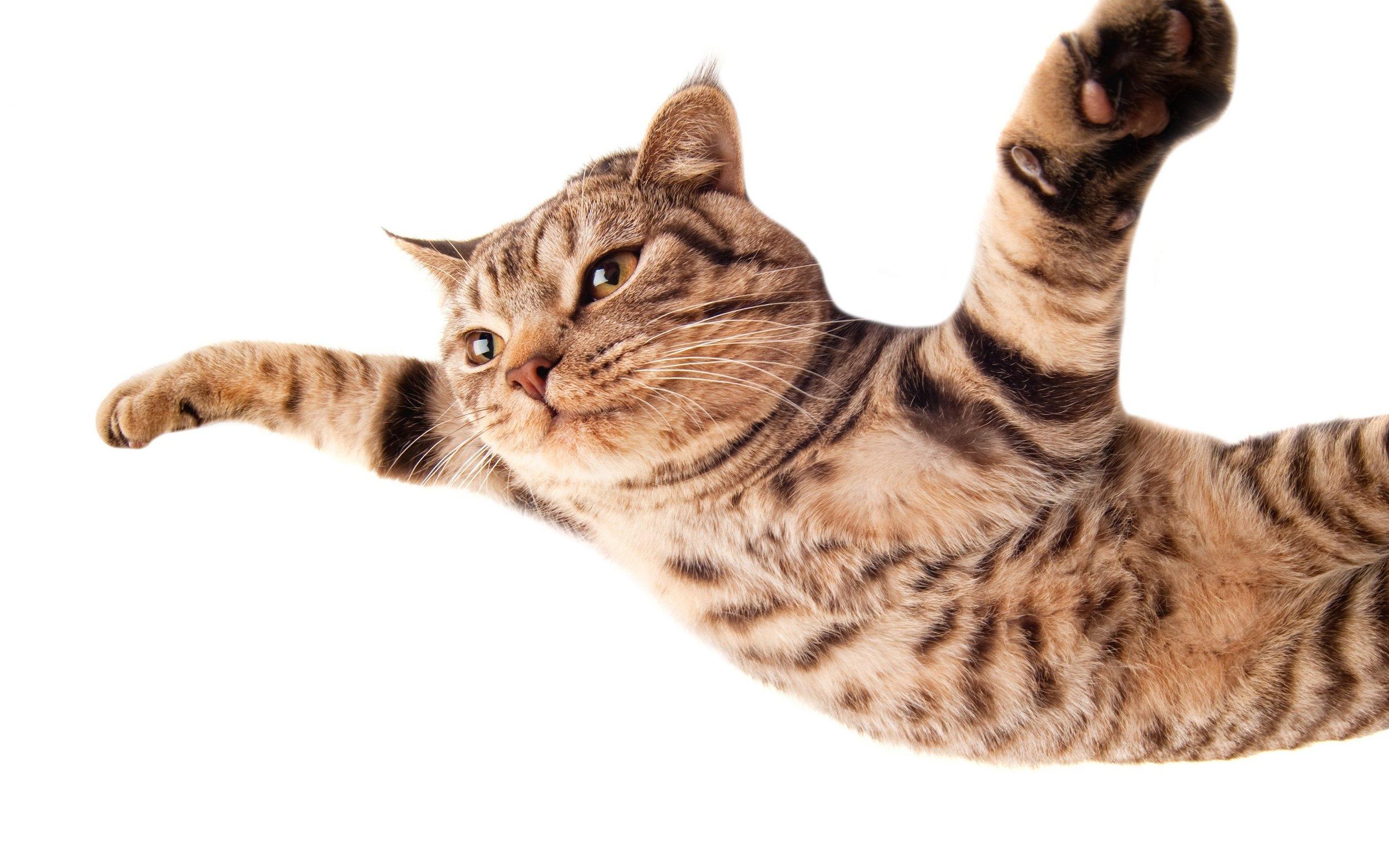 flying-cat-desktop-background.jpg