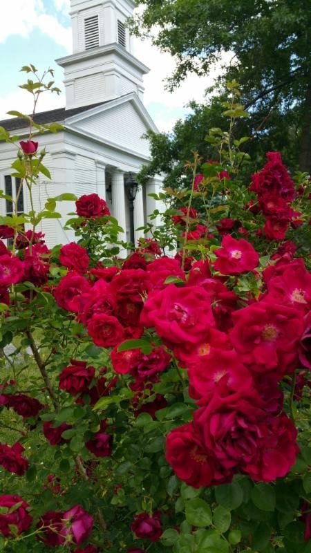 roses in cem.jpg
