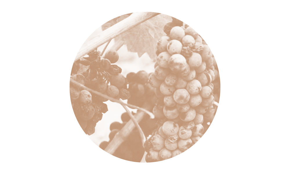 SB-grapes.png