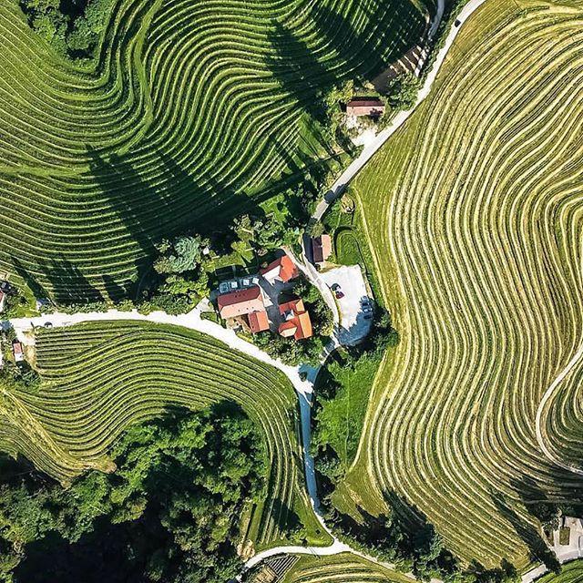 Slovenia wine country... #travelgoals  Beautiful!! Happy Thursday everyone !! #sentobenewines #misentobene #travelgoals 🥂