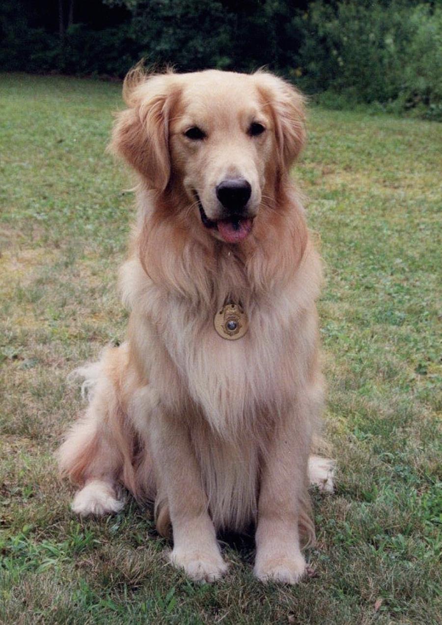 Dog_K9Bucca_1b.jpg