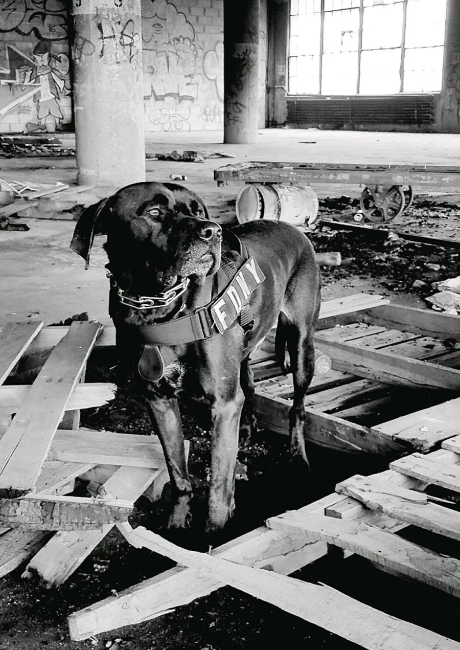 Dog_K9Bucca_2b.jpg