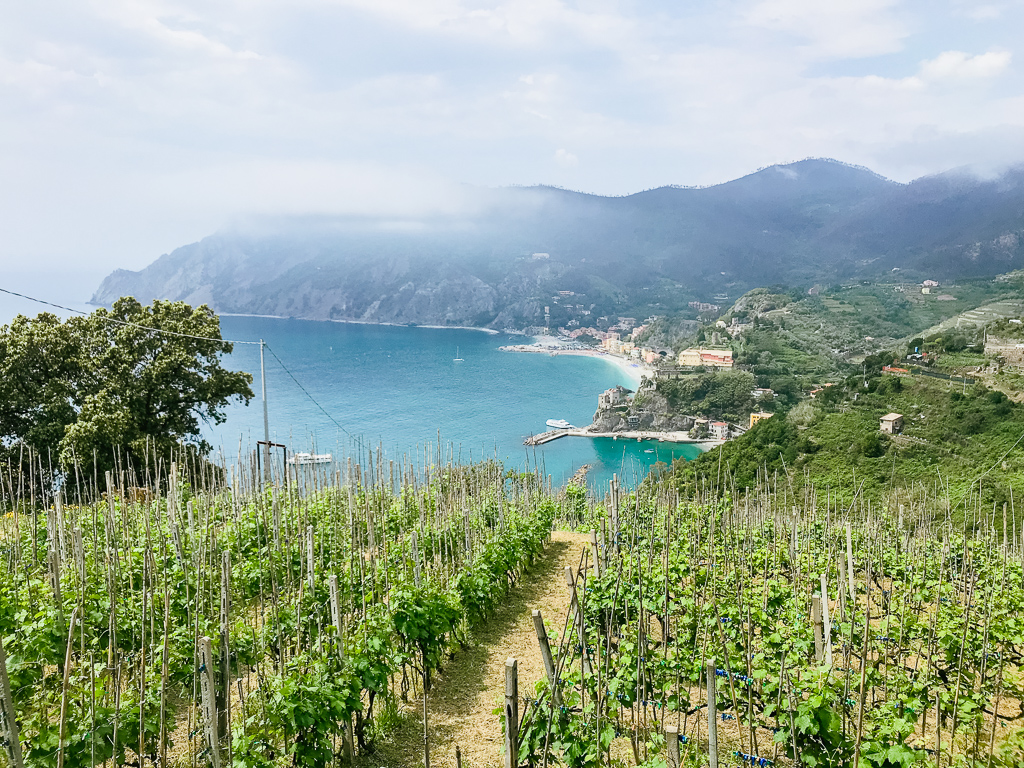 Vineyards along the descent into Monterosso from Vernazza