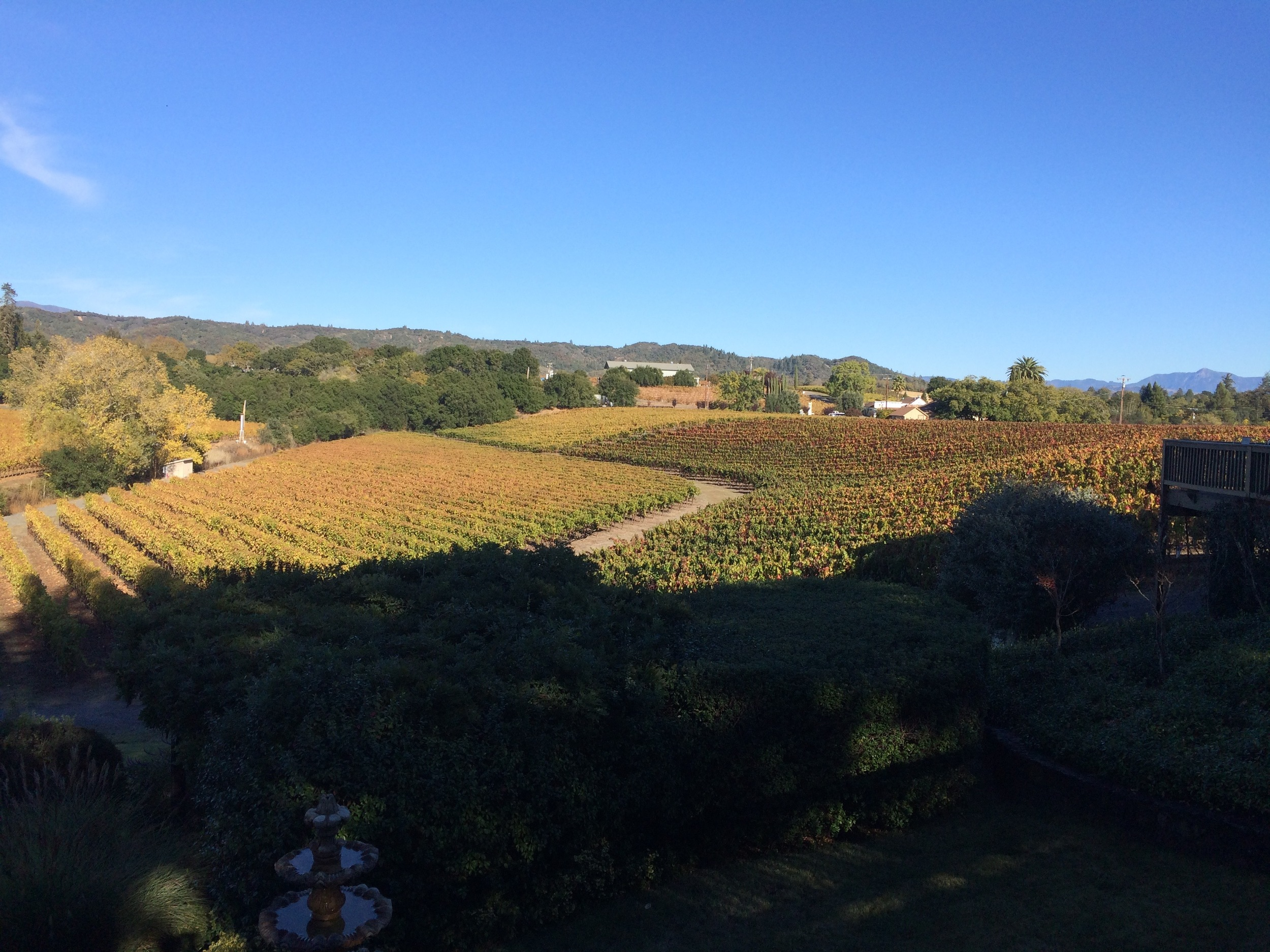 One of the view we enjoyed while tasting some delicious wine.