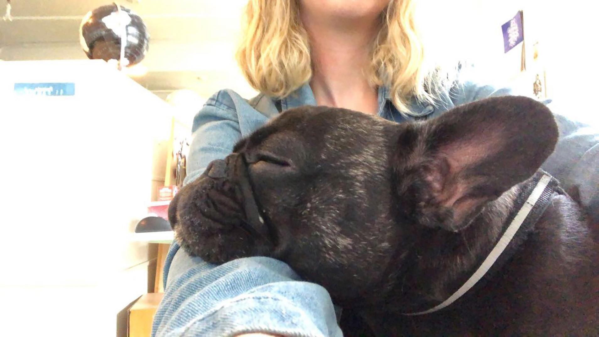 Long-time office dog/resident gremlin, Pepper, hard at work.