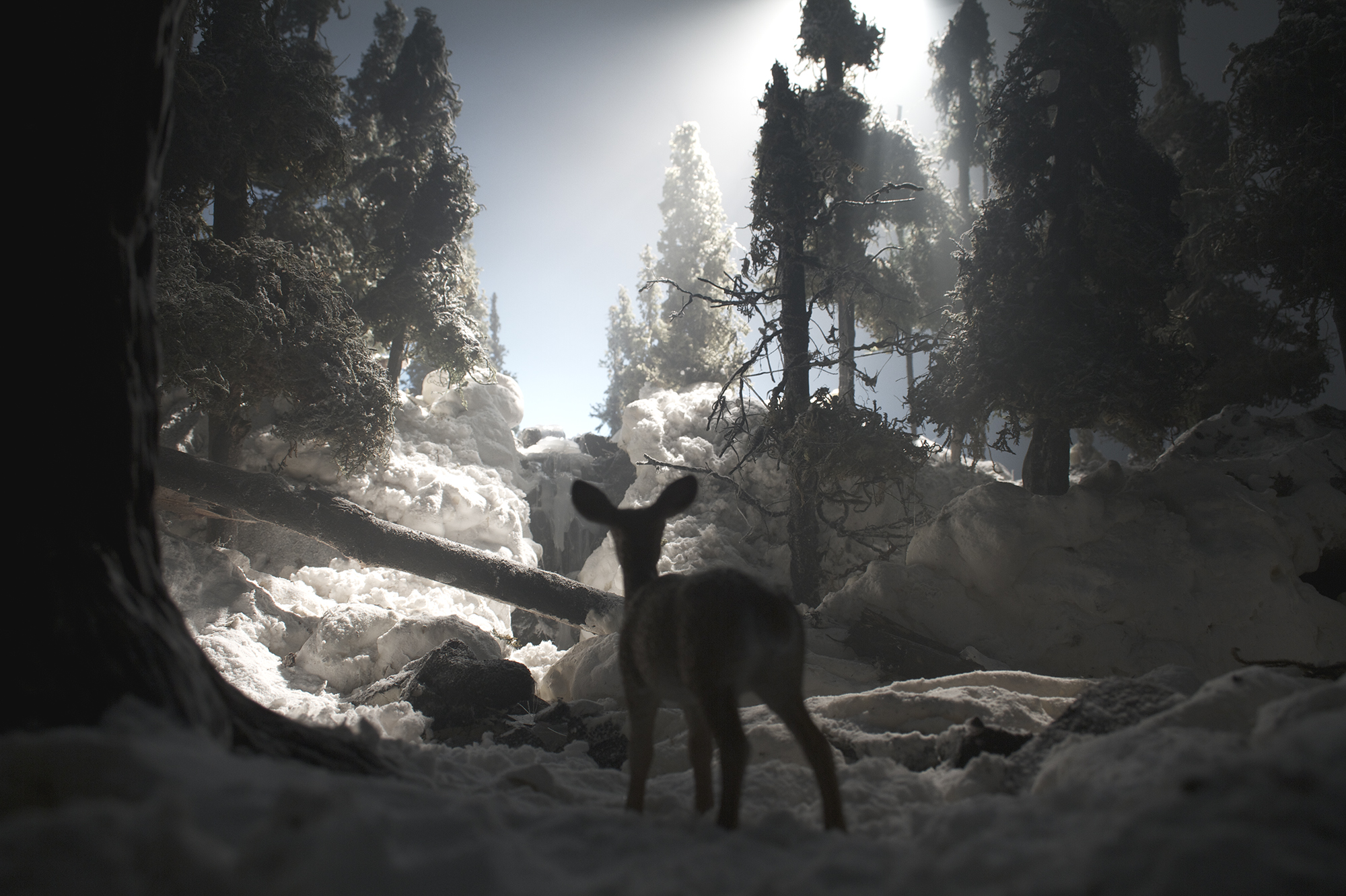 Winter Deer (framed)