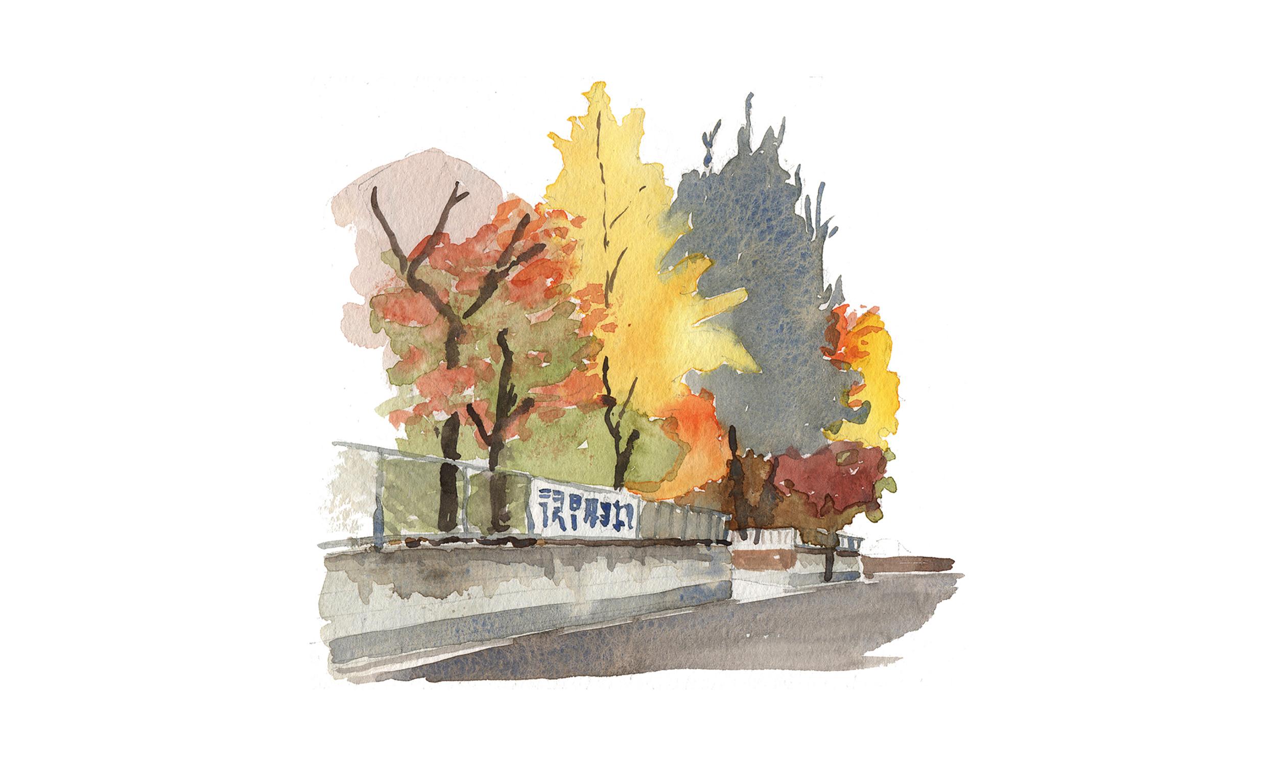 street trees.jpg