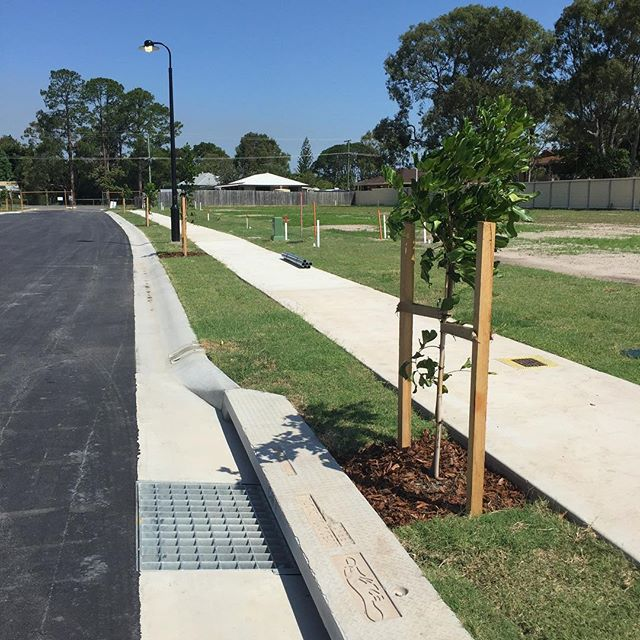 DNA Civil's latest sub division nearing completion with freshly laid asphalt and landscaping. #subdivision #dnacivil #asphalt #trees