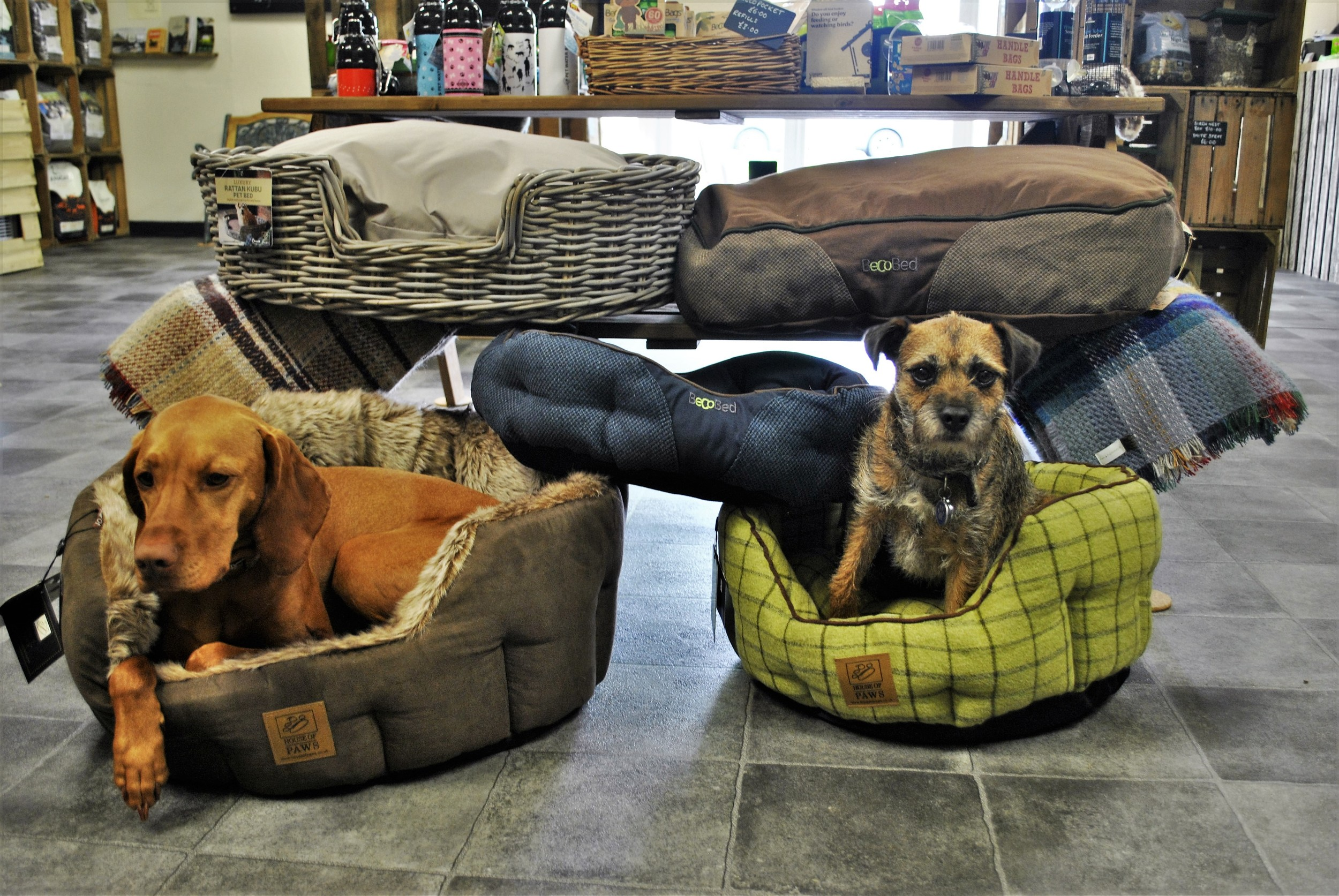 Dog beds for sale at Ginger&Browns pet shop in Northwich, Chester near Chester, Winsford, Frodsham. Shop in store or buy online.