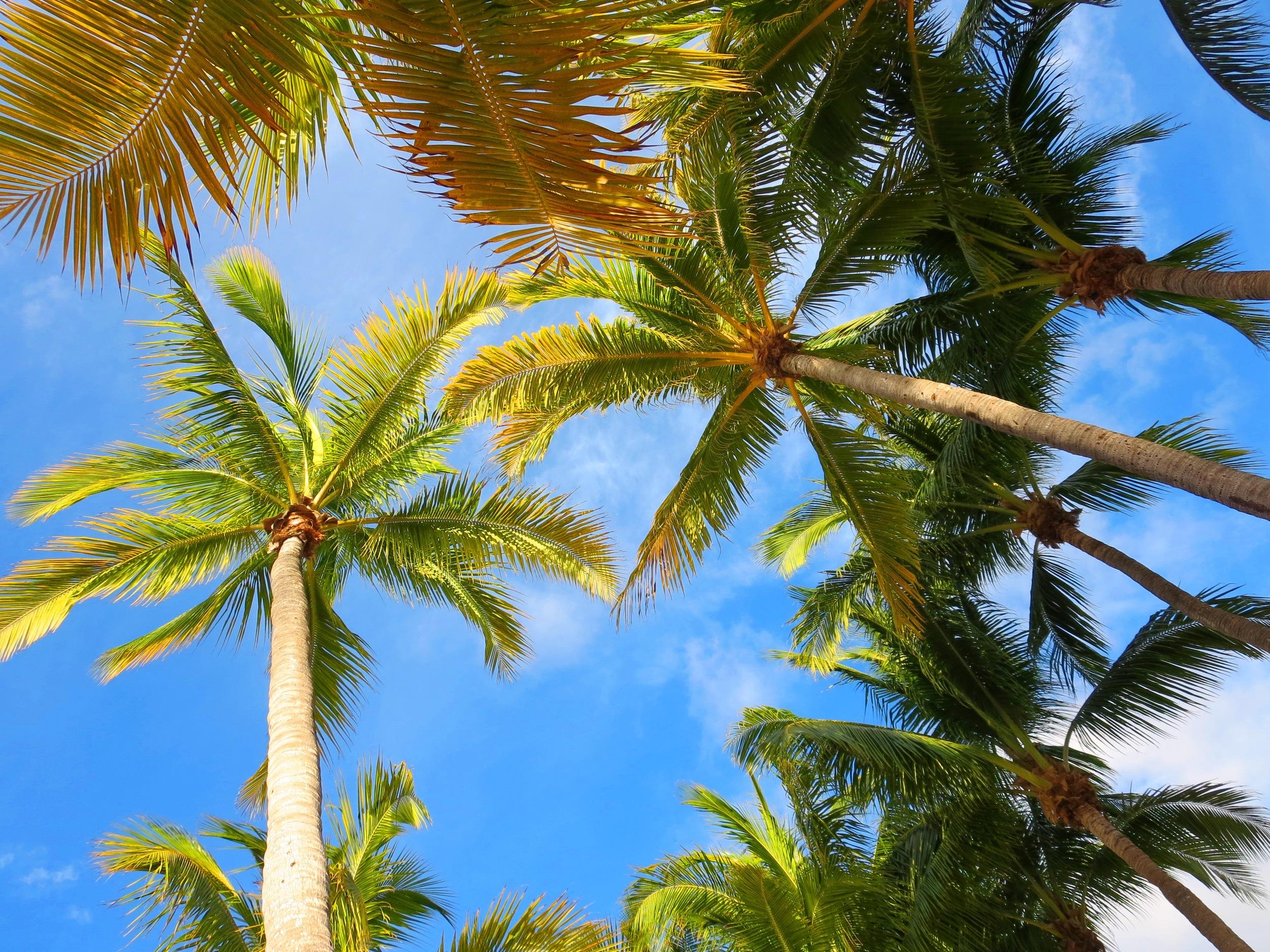 La Brisa Unit Palm Trees From Pool