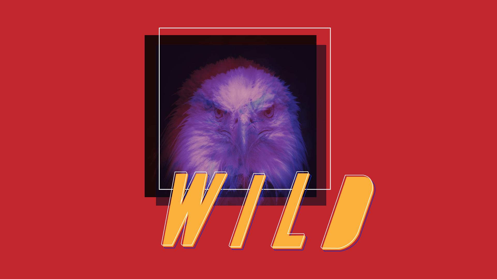 wildwk4_screens.png