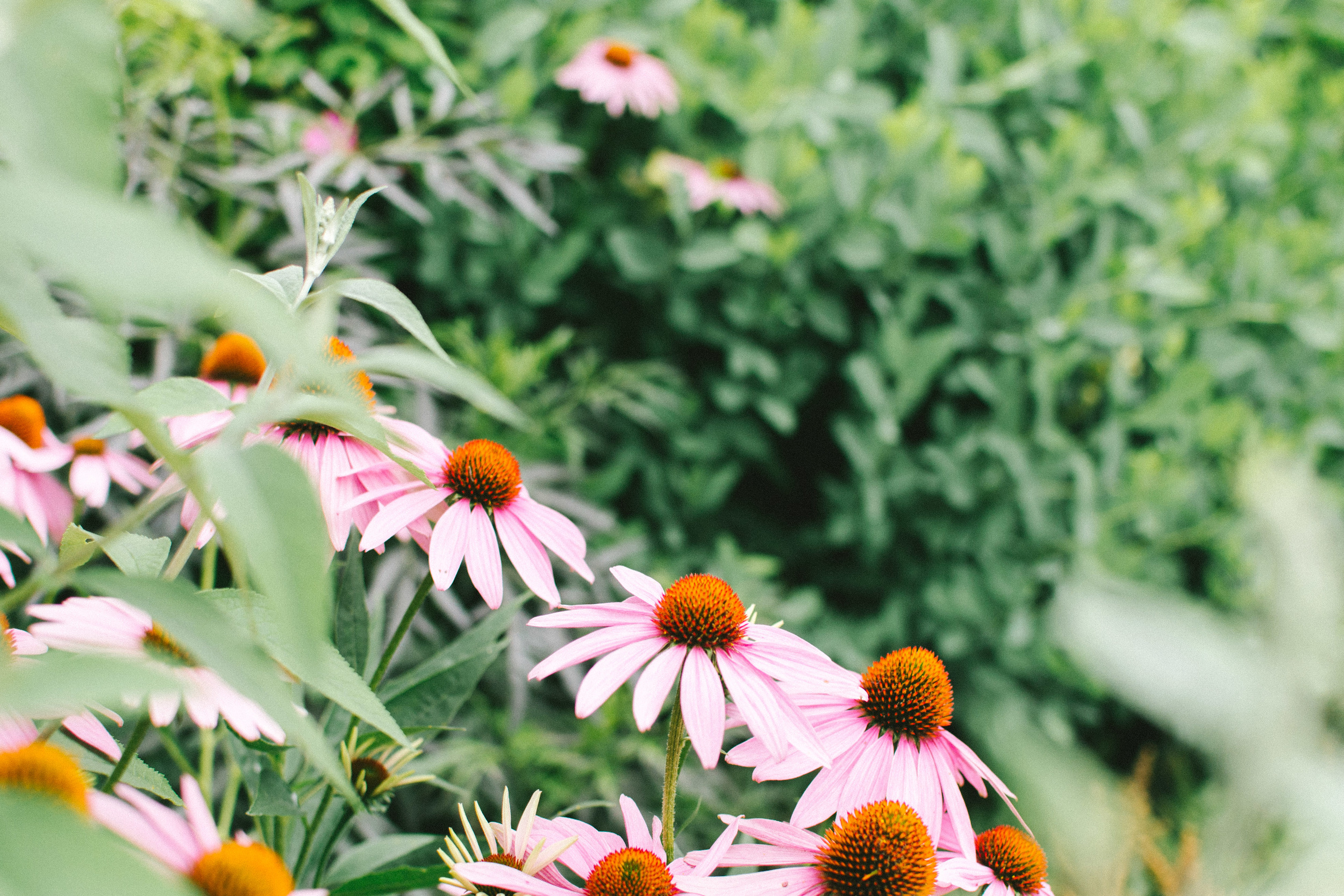 GARDENING RESOURCES   A list of gardening-related links to help answer your gardening questions.   START DIGGING