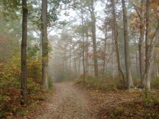 Road in Woods.JPG