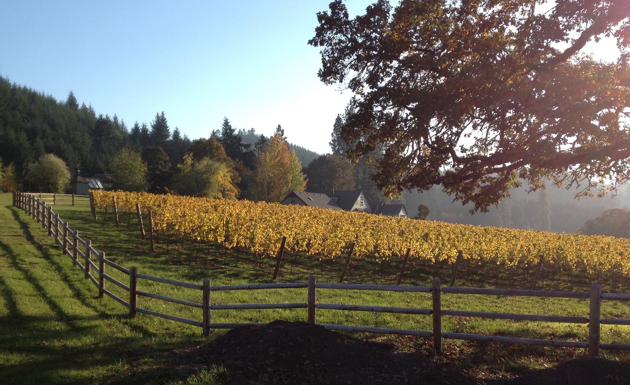 bennett-vineyards-fall.jpg