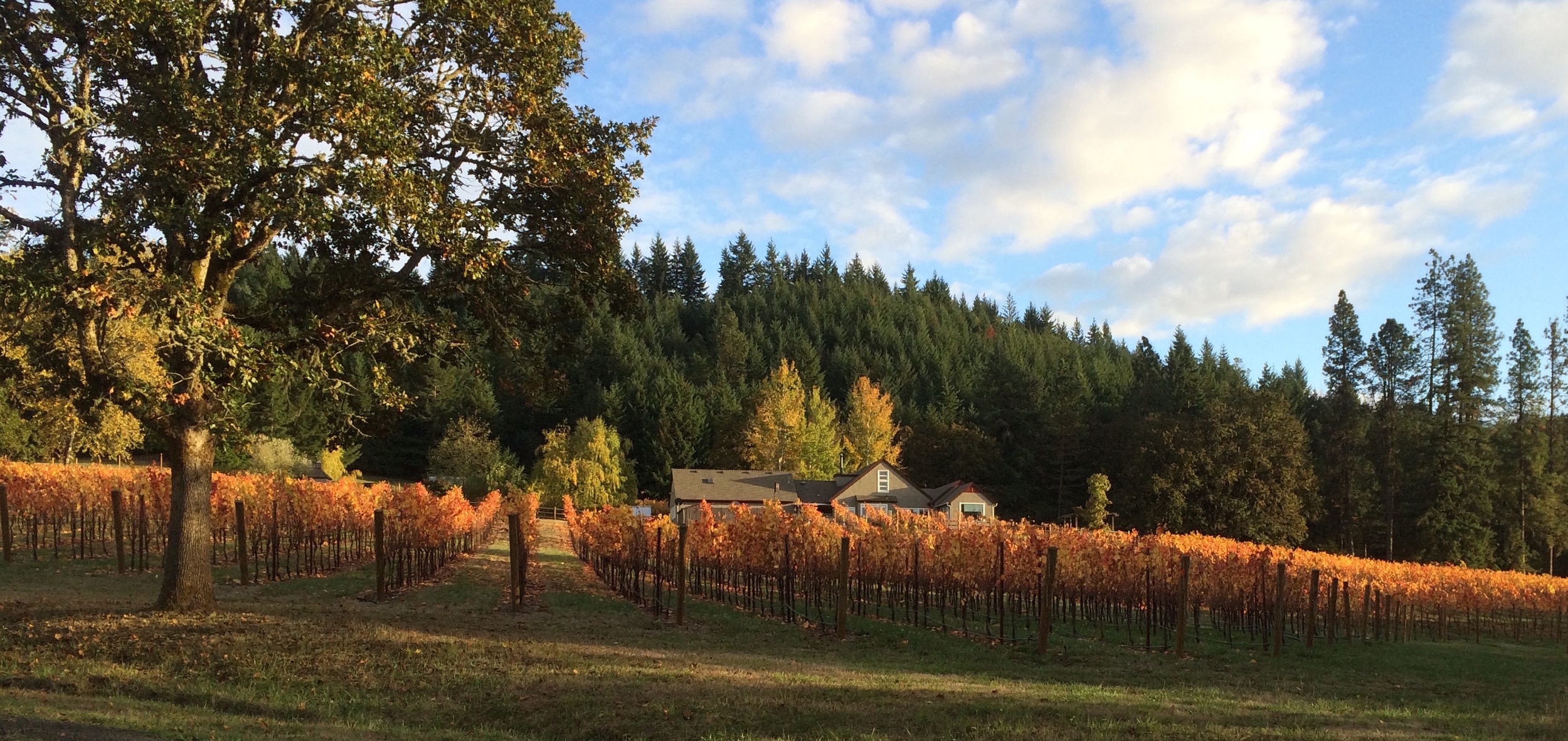 bennett-vineyards-fall-2.JPG