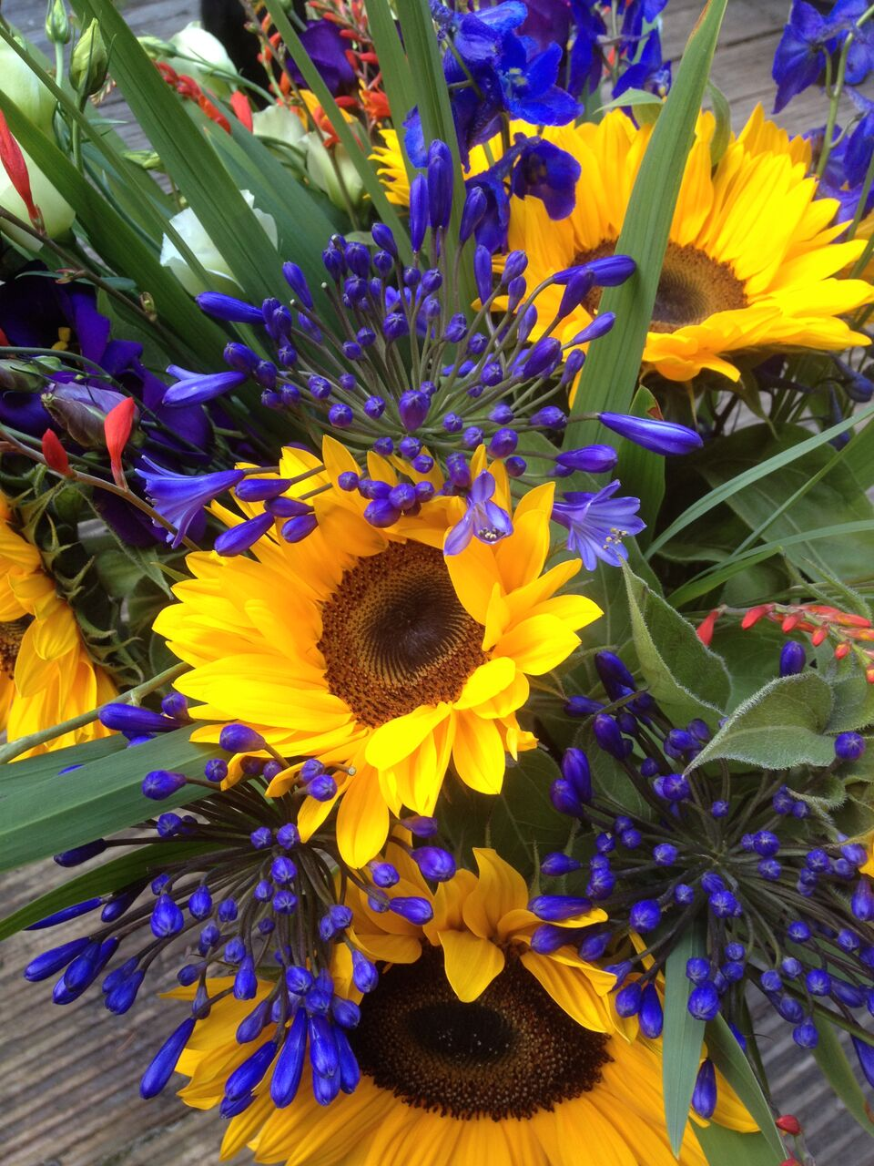 Agapanthus and sunflower