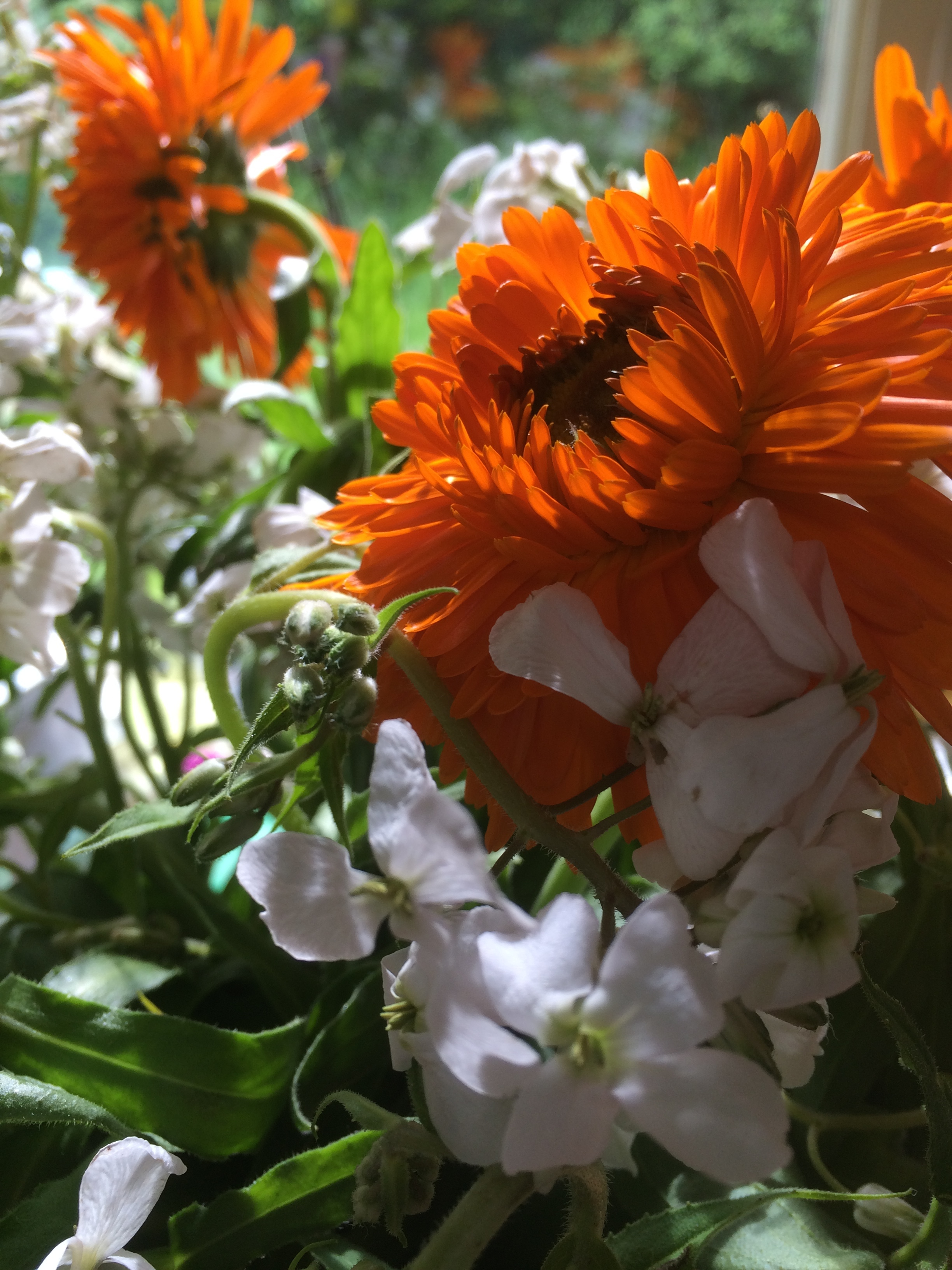 """Sweet rocket and calendula  """" Just living is not enough, one must have sunshine, freedom and a little flower""""   Hans Christian Anderson"""