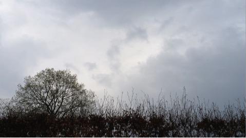 sky ref images.jpg
