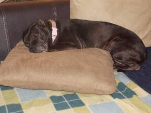 Vivi says the cushions in her new home are the absolute BEST!!