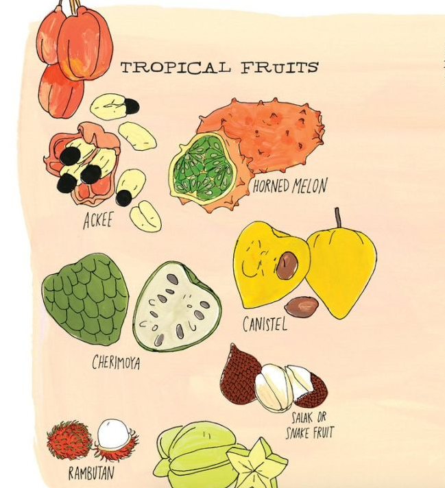 The Illustrated Anatomy of Food