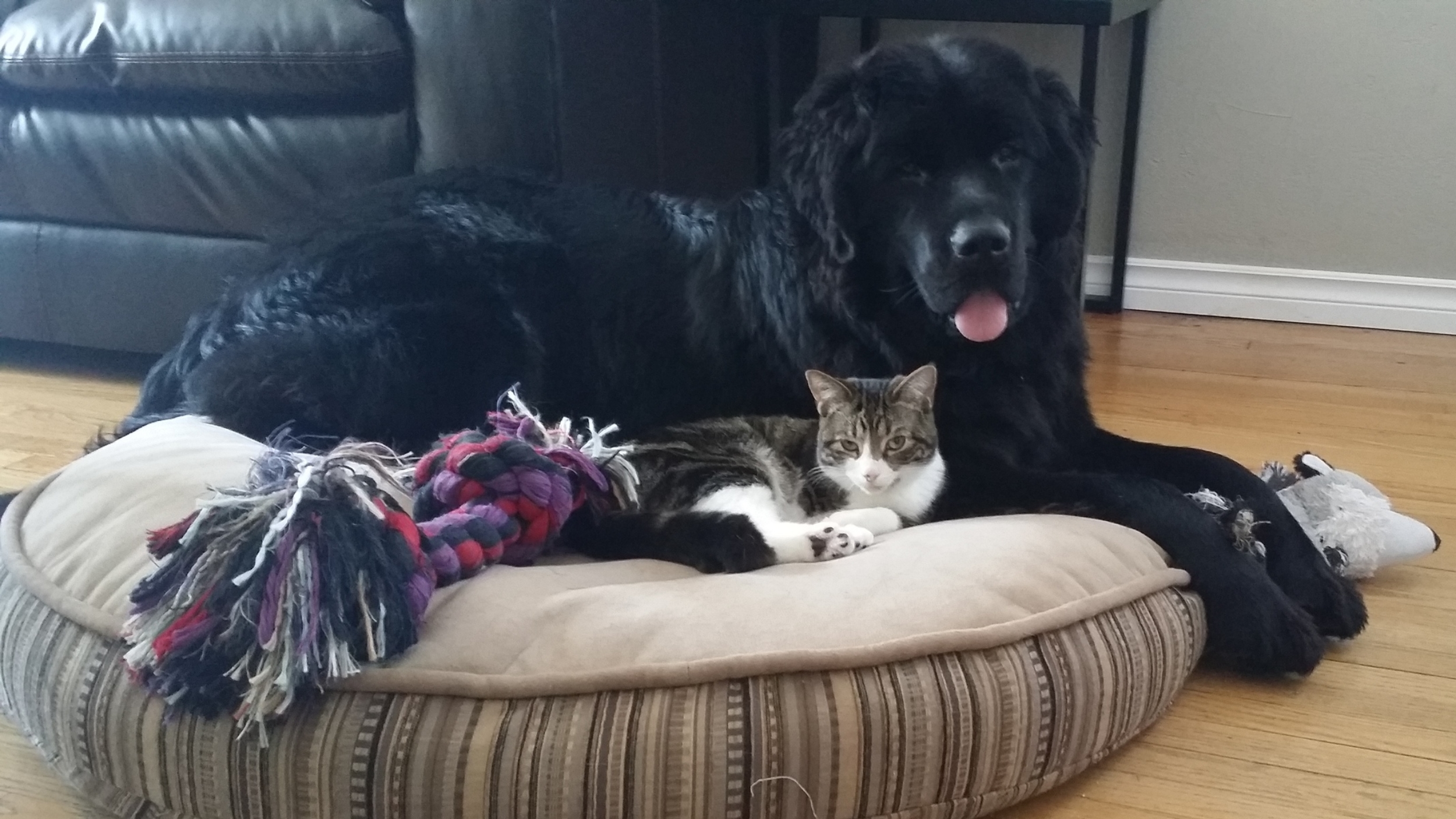 Sharing the dog bed