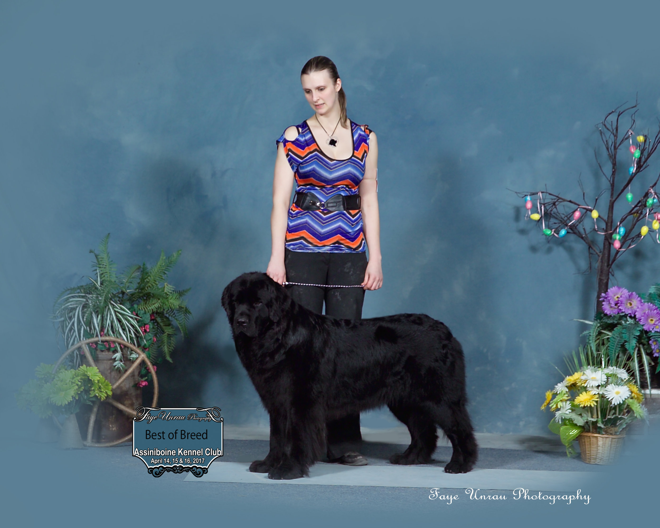 Lanfear, Best of Breed and in coat :)