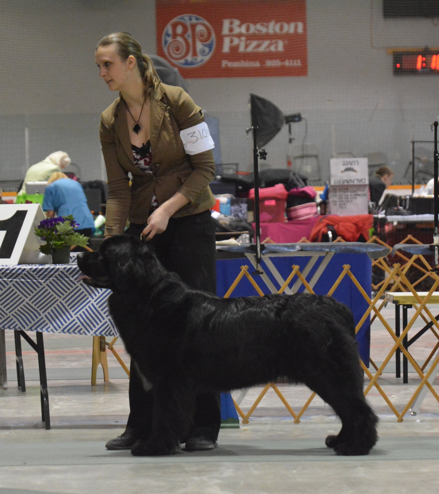 Syl went Best of Breed and is now competing for best of group