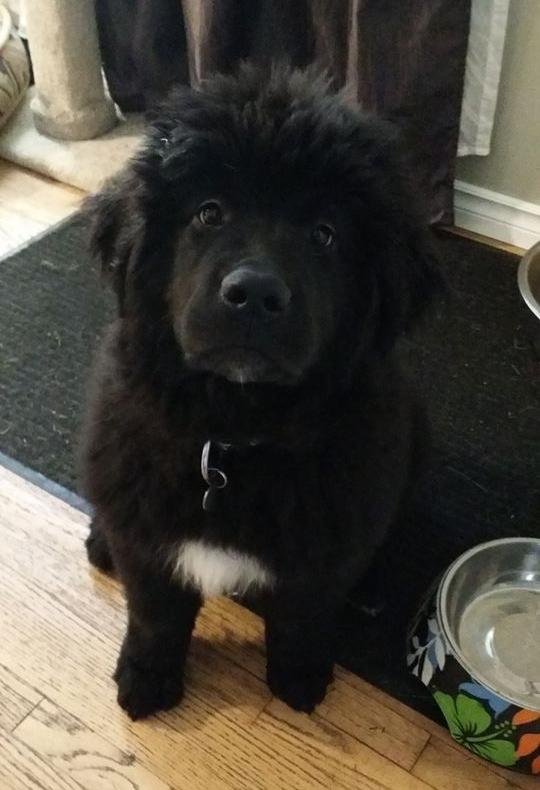 Syl, 14 weeks old