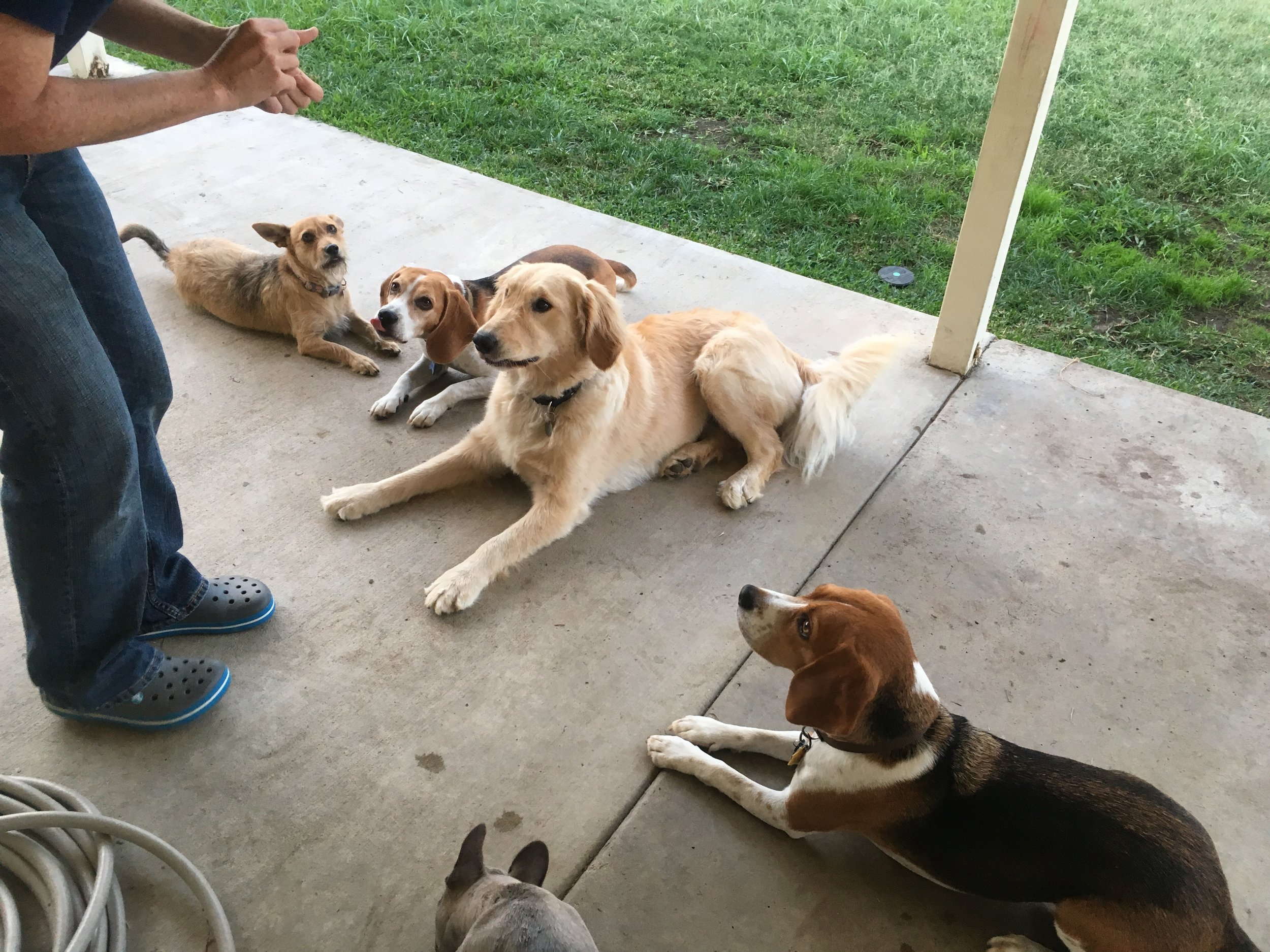Puppy Day School 1