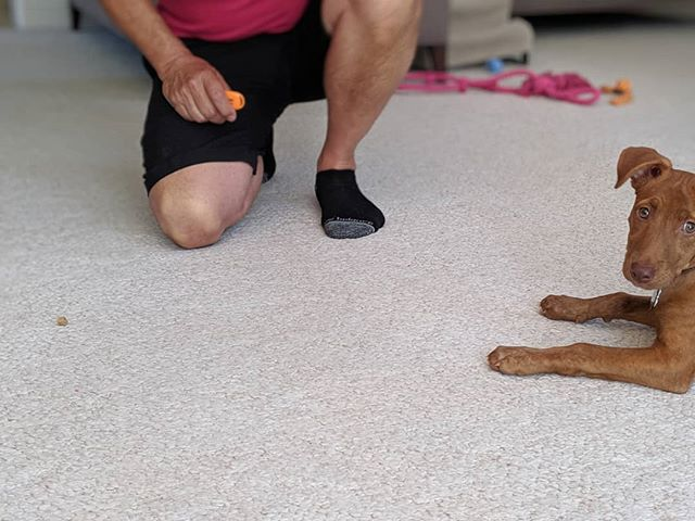 The leave it cue teaches your puppy an invaluable lesson in impulse control #impulsecontrol #positivereinforcement #puppytraining #puppiesofsandiego #dogpanion #sandiegodogtrainer #sandiegodogtraining