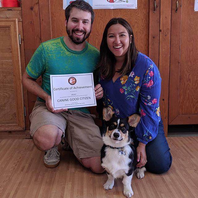 Newest Canine Good Citizen, Mickey #congrats #caninegoodcitizen #dogpanion #dogtraining #corgisofinstagram #sandiegodogs #sandiego