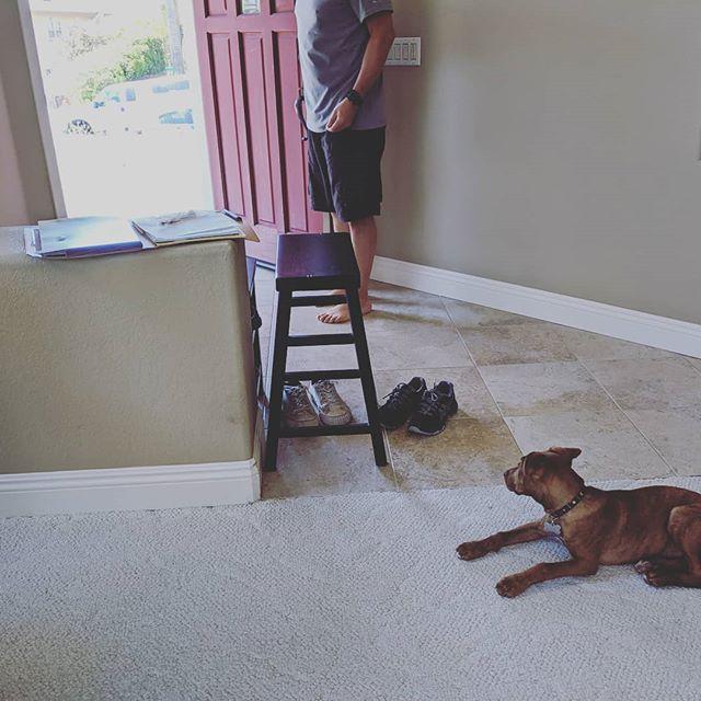 Teach your dog to wait at the door and not run out the door the second it opens.  Good work Sake! #waitatthedoor #wait #doordash #privatetraining #sandiegodogtraining #waytogo #dogpanion