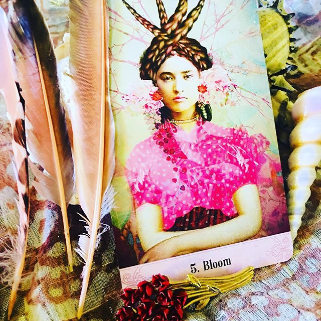 "Today's ORACLE MESSAGE - BLOOM 🍀☘️🌳🌷🌺 Hello Lovelies, The card that popped out today for us all has a bountiful message: ""She knows what she wants and this certainty blooms out of her being like a bountiful garden. The power of nature surrounds her, flowing both into her and out from her."" (Guidebook) 🍇🍓🧚‍♀️ . Recently a flock of bluejays camped out on top of the tall oaks and pines around our deck waiting for me to offer a feast of seeds and nuts. They bring their fledglings too and along with doves and crows call to me and each other. What a blessing! 🦅🦉🐤🦉🦅 . Projects are bountiful too as I flow through the hours today. Moments bursting with potentiality. 🦋 . I know I will need to harness this life force to reach future goals, but for today, I am connected and grounded in the power that is always there.🌳 . What about each of you? Can you imbibe this loving soft, yet vibrant pink in your heart chakra and your aura? FEEL the love for yourself and confidence to blossom into your accomplishments and achievements? Allow your brilliance to bloom out of your being into the field around you. Relax into your genius and connection to Mother Earth! 🌍✨🌕 . All love and wishes to each of you! Please comment below about how you are blooming. I would love to hear from you. Perhaps a bud, or maybe full bloom? ⛲️🍇🌺 . Dhyana 💓💖🌝 .  #dailydivination#cardoftheday#oracleofmysticalmoments#catrinwelzstein #energyhealing#newfrequencies#soulexpansion#oraclecardreading#angelreadings#dailytarot#magick#divineabundance#witchlife#witchesofinstagram#"