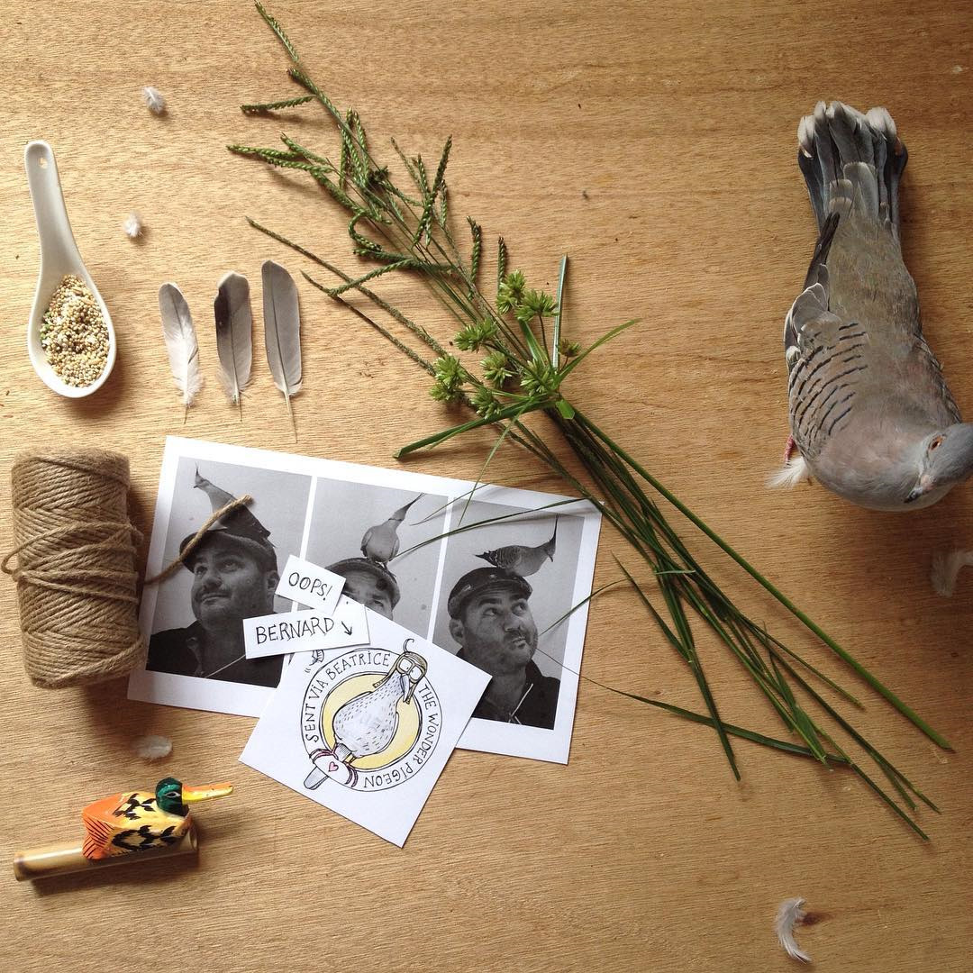 The before and after shots of a bird flatlay with Bernard the Wonder Pigeon