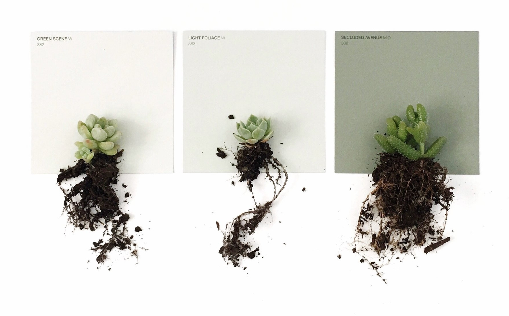 Flatlay using paint swatches and succulents as props.