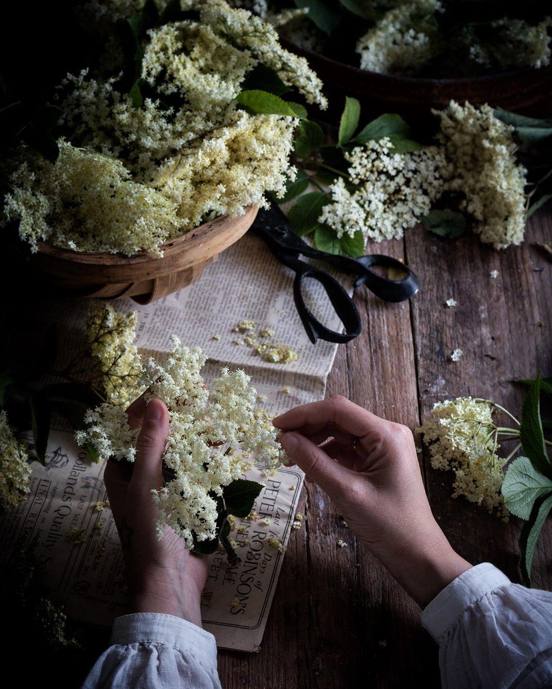 Aimee preparing beautiful elderflowers to make gin and cordial . Source:  @twiggstudios