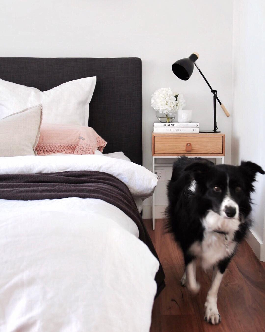 MIchelle's fur baby is very much at home in the bedroom. Source:  @everyday.home