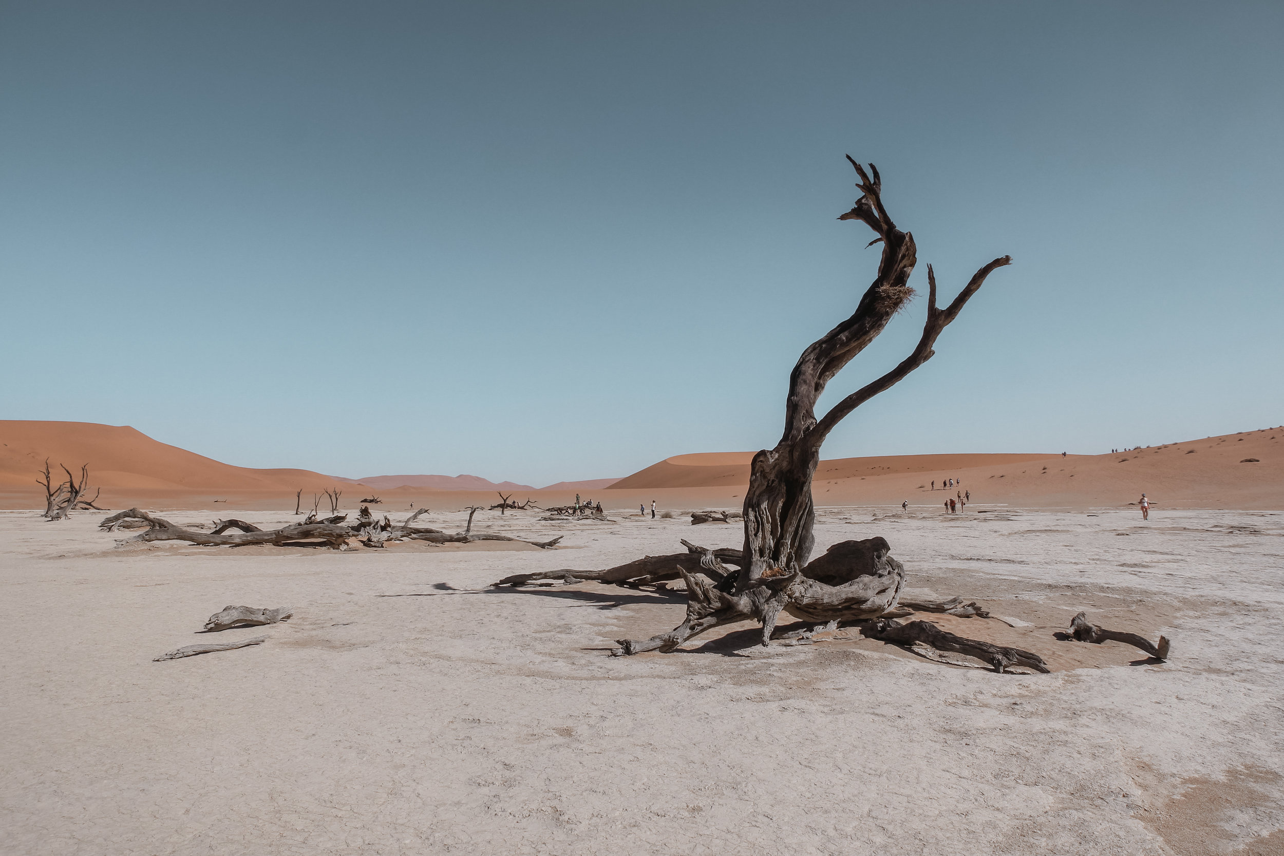 dead trees and limbs in the middle of the desert