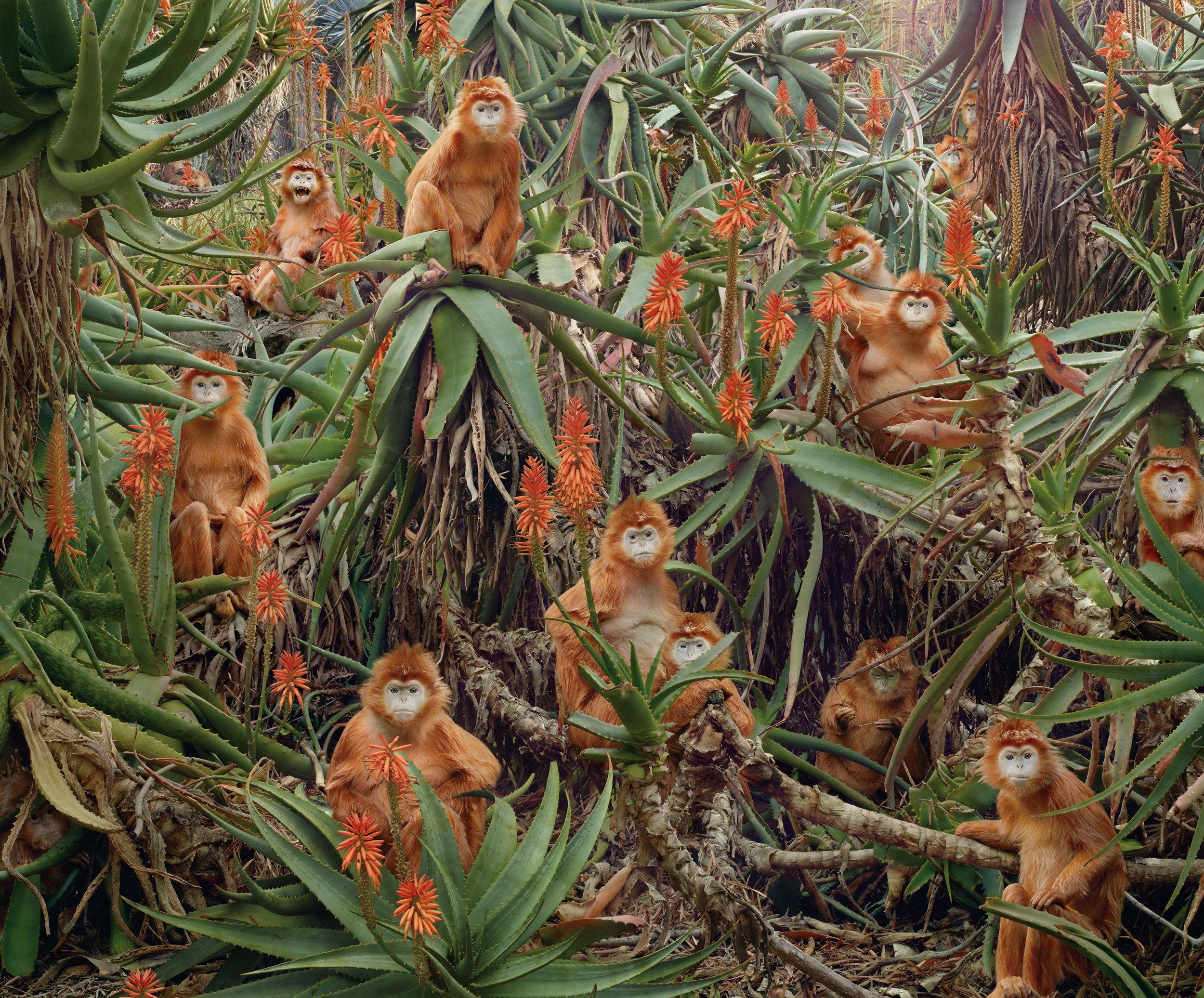 24_SJohan_#174 (Red Monkeys).jpg