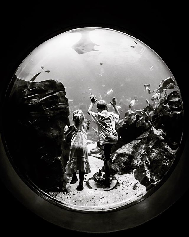Floating kids!  #atlantabotanicalgardens #circle #fisheye #aquarium #canon2470 #canon #blackandwhite