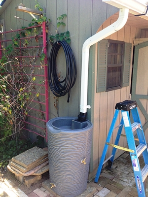 Photo of rain barrel under a home's downspout