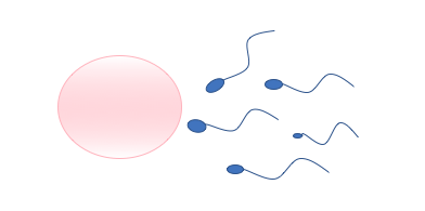 There are a plethora of methods to prevent conception
